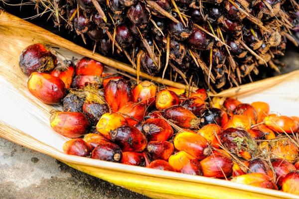 La ubicuidad del aceite de palma hace difícil mantener hábitos saludables de alimentación.